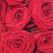 @lallabypremiumflowershop roses insta web